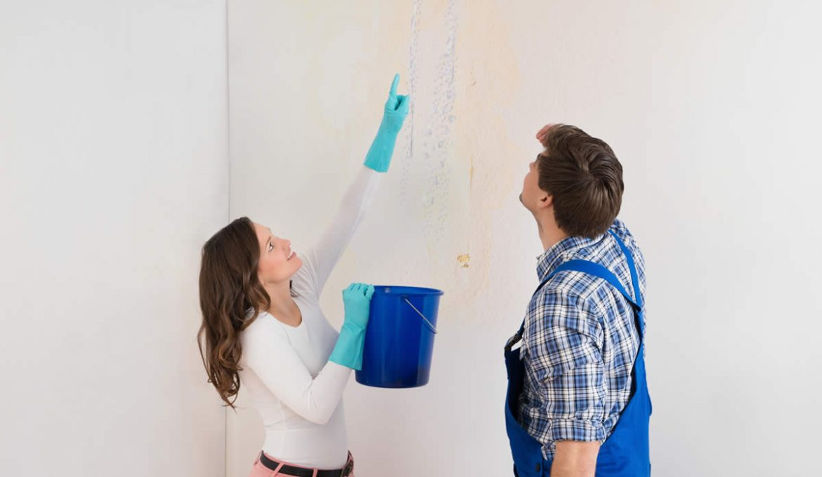 Do You Have Mold in Your Michigan Home? Let's Learn More About it!