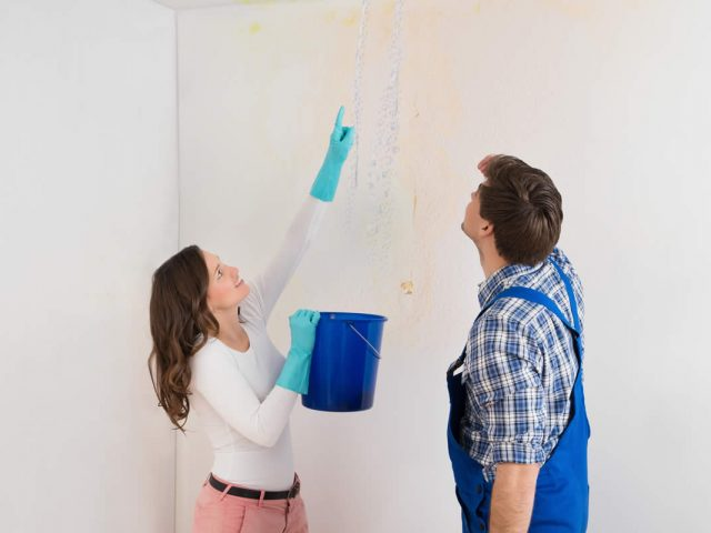 What Can You Do About Mold Removal in Michigan?